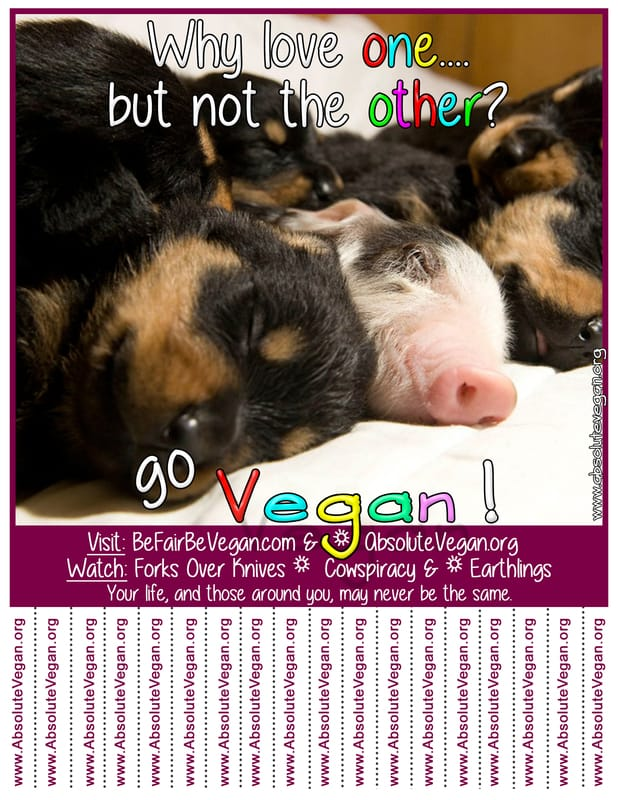 Vegan advocacy tear-off posters -  Why love one....but not the other?  Go Vegan!  AbsoluteVegan.org