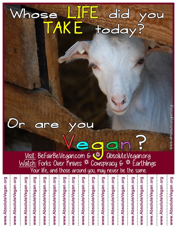 Vegan advocacy tear-off posters - Whose LIFE did you TAKE today? Or are you Vegan?  AbsoluteVegan.org