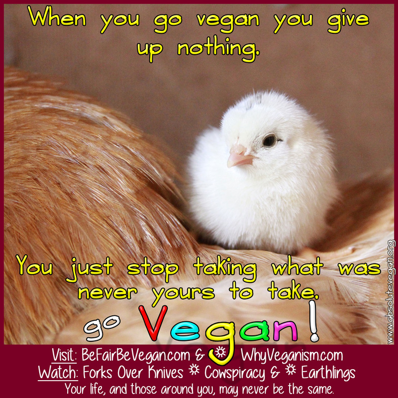 Absolute Vegan: When you go vegan you give up nothing.  You just stop taking what was never yours to take.