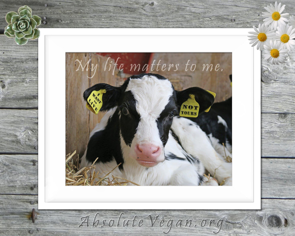 AbsoluteVegan.org on Etsy